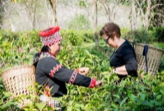 Araksa Tea Tour with Private Transfer (Morning Arrival)