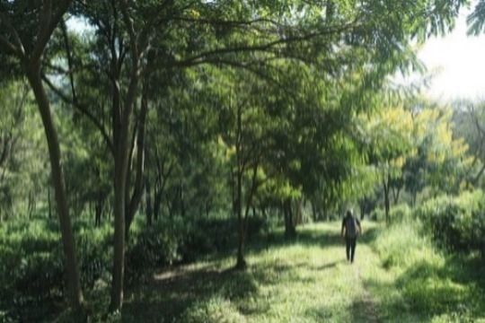 To explore our beautiful tea garden in leisure on a scenic nature trail.