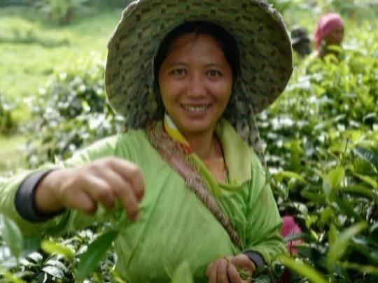 Araksa Tea Garden Tour with Lunch (Morning arrival)